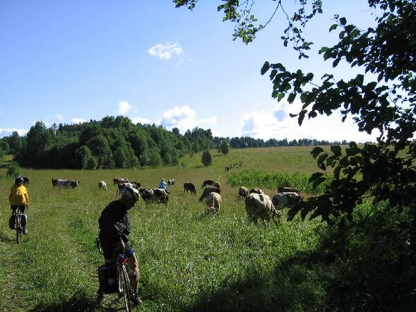 bicyclists in russian field